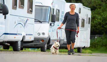 Aus Rücksicht auf die Nachbarn sollte man Hunde nicht frei laufen lassen.