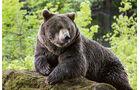 Bär im Nationalparkzentrum Lusen