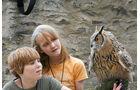 Greifvogelvorführung mit Eule