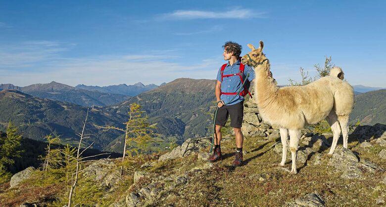 Katschberg mit Lama