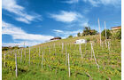 Mobil-Tour: Piemont, Weinberge
