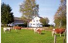 Stellplatz am Birkenhof in Hillesheim